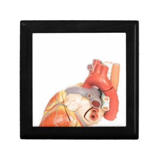 Artificial model of a heart side view small square gift box