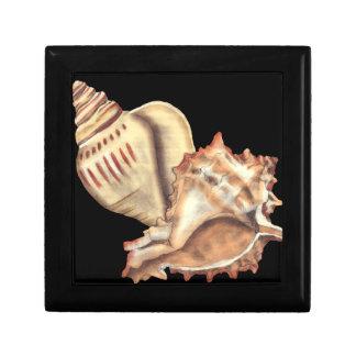 Artistic Conch Shells Small Square Gift Box