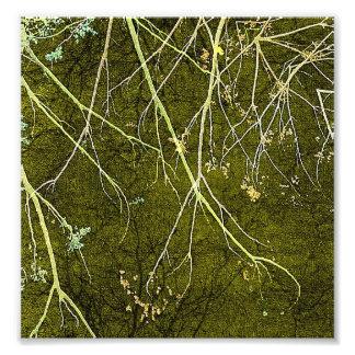 Artistic Nature Composition Photograph