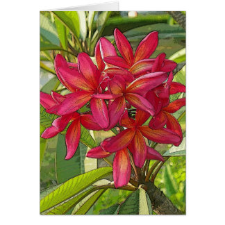 Artistic Plumeria Photo on Card