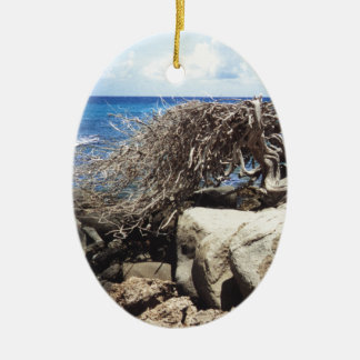 Aruba Divi Divi Tree At The Ocean Christmas Ornament
