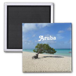 Aruba Divi Divi Tree Square Magnet