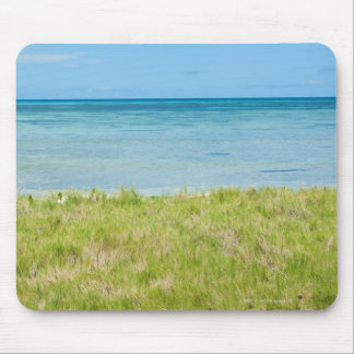 Aruba, grassy beach and sea mouse pad