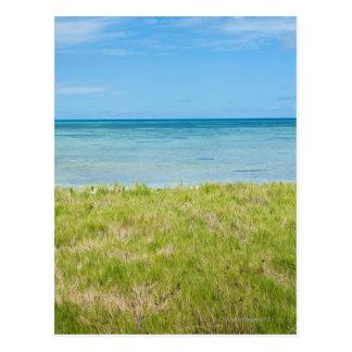 Aruba, grassy beach and sea postcard