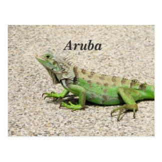 Aruba Green Iguana Postcard