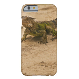 Aruba, lizard on sand barely there iPhone 6 case