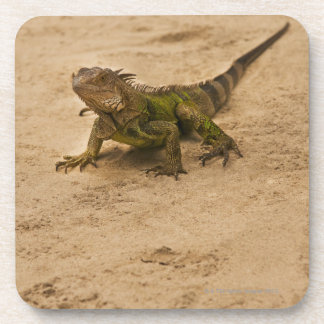 Aruba, lizard on sand coaster