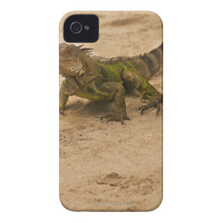 Aruba, lizard on sand iPhone 4 Case-Mate cases