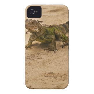 Aruba, lizard on sand iPhone 4 cases