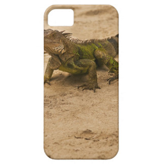 Aruba, lizard on sand iPhone 5 covers