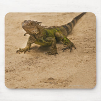 Aruba, lizard on sand mouse mat