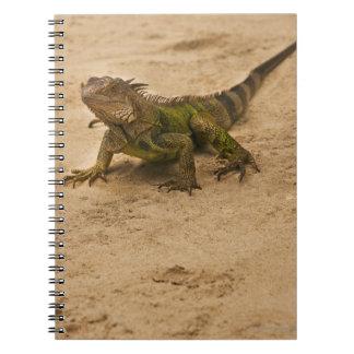Aruba, lizard on sand notebook