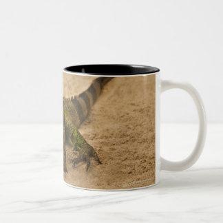 Aruba, lizard on sand Two-Tone coffee mug