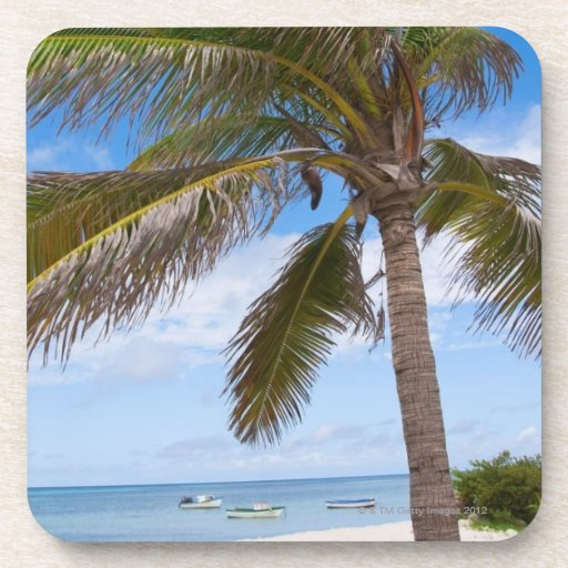 Aruba, palm tree on beach drink coasters