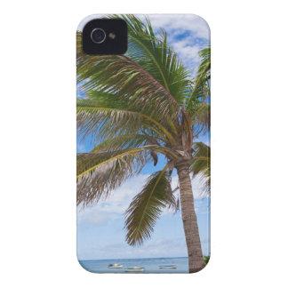 Aruba, palm tree on beach iPhone 4 covers
