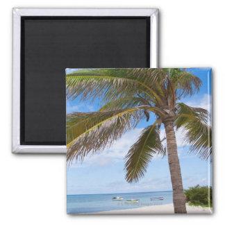 Aruba, palm tree on beach magnet