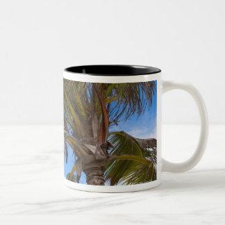 Aruba, palm tree on beach Two-Tone coffee mug