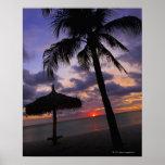 Aruba, silhouette of palm tree and palapa