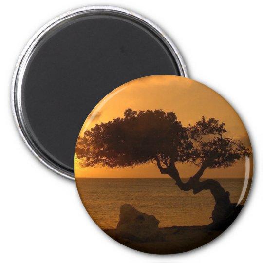 Aruba Sunset Divi Divi Tree 6 Cm Round Magnet