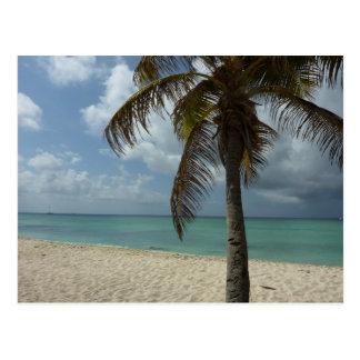 Aruban Beach I Beautiful Nature Scene Postcard