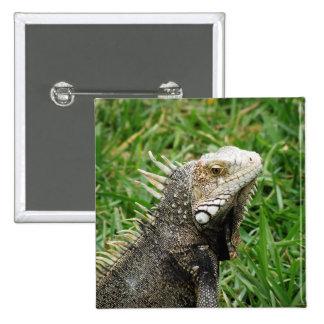 Aruban Lizard Pinback Button
