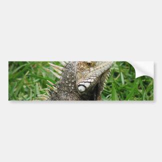 Aruban Lizard Bumper Stickers