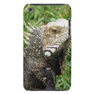 Aruban Lizard iPod Touch Cases