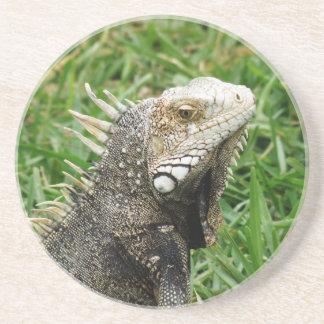 Aruban Lizard Drink Coasters