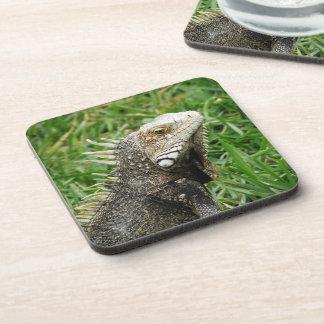 Aruban Lizard Beverage Coaster