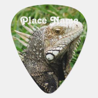 Aruban Lizard Guitar Pick