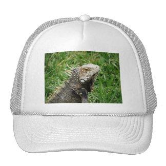 Aruban Lizard Trucker Hat