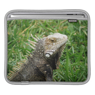 Aruban Lizard Sleeves For iPads