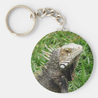 Aruban Lizard Keychains