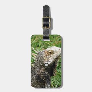 Aruban Lizard Tag For Luggage