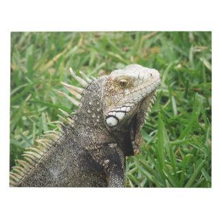Aruban Lizard Memo Note Pad