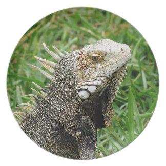 Aruban Lizard Plate