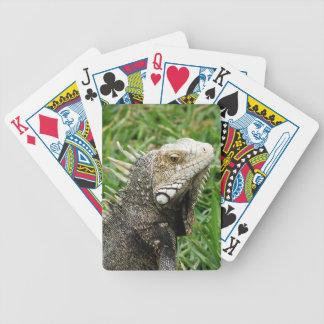 Aruban Lizard Bicycle Card Deck