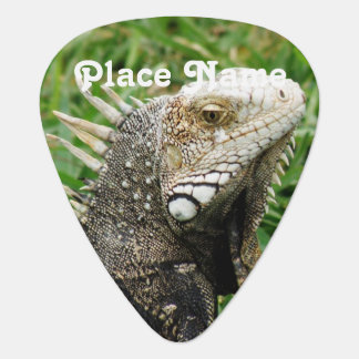 Aruban Lizard Plectrum