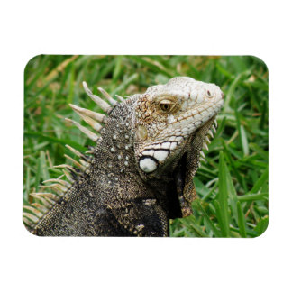 Aruban Lizard Flexible Magnet