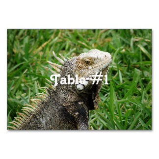 Aruban Lizard Table Card