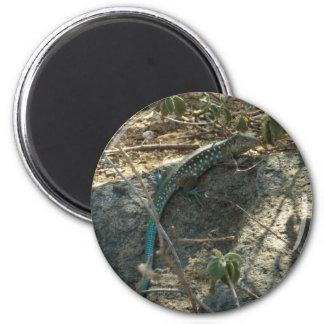 Aruban Whiptail Lizard Magnet