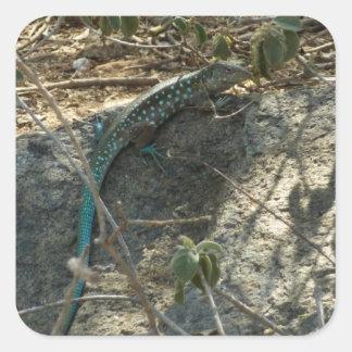 Aruban Whiptail Lizard Sticker
