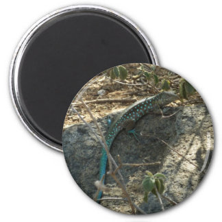 Aruban Whiptail Lizard Tropical Animal Photography 6 Cm Round Magnet