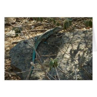 Aruban Whiptail Lizard Tropical Animal Photography Greeting Card