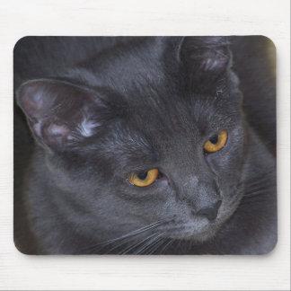 Arys gray kitty mouse pad