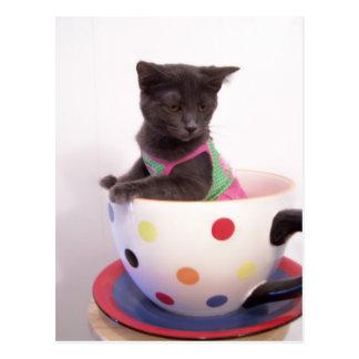 arys kitten postcard