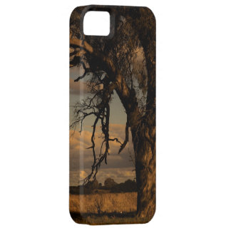 As a matter of fact iPhone 5 cover