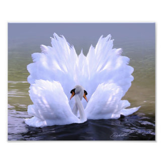 As One, Swans by Danny Hahlbohm Art Photo