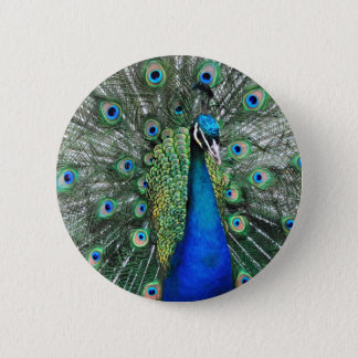 As Proud as a Peacock 6 Cm Round Badge
