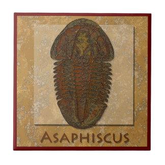 Asaphiscus Fossil Trilobite Small Square Tile